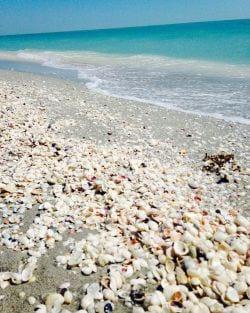 A photo of Seashells on the beach on Sanibel Island
