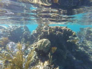 Perfect underwater scene in Andros.