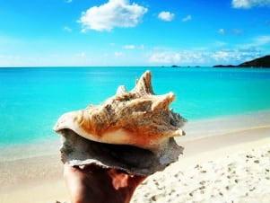 Perfect shell in Antigua Island.