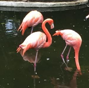 Adorable pink Flamingos