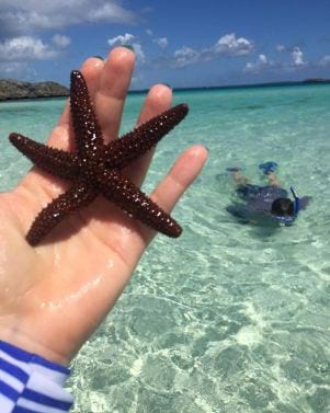A picture of a Wild starfish in Eleuthea Bahamas