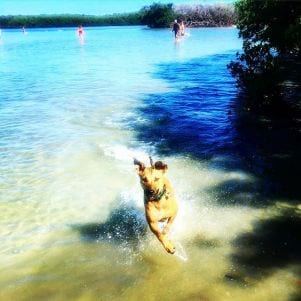 A dog loving Pet Beach on Fort Myers Beach Florida