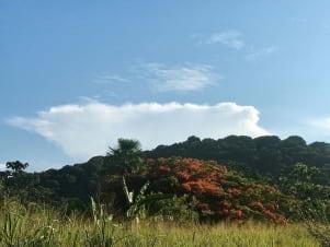 A panoraic view in Guyane.