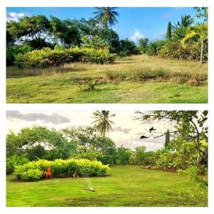 Before and after some yard work in Kauai Hawaii