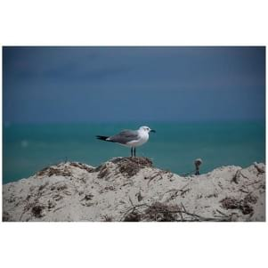 Wonderful shot of a seagull in Miami after Irma.