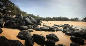 Definitely a diamond in the rough on a beach in Molokai Hawaii