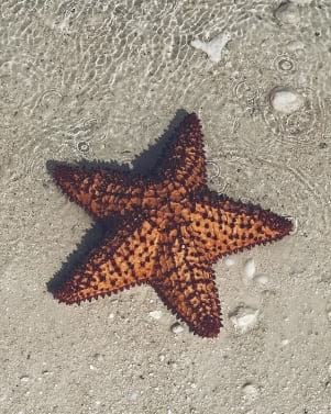Closeup shot of a starfish