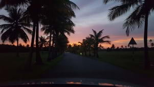 Sunset through the trees. Palm Drive at Magdalena Grand Beach and Golf Resort, Tobago